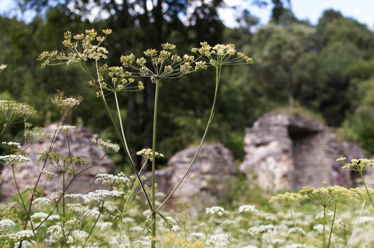 Žolėmis apaugusi Pučkorių popieriaus gamykla